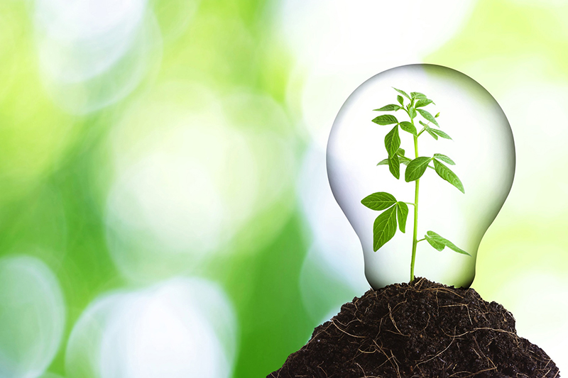 Ways to Help Your Business Go Green